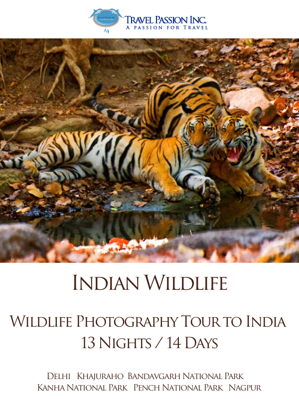 Wildlife Tour Packages of India, Customised Tour Packages , India Tour Packages, Travel Passion Inc.